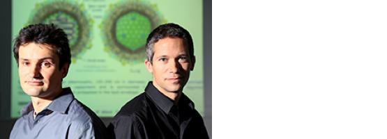 Génome contre génome : l'impact des variations génétiques humaines sur les infections virales chroniques